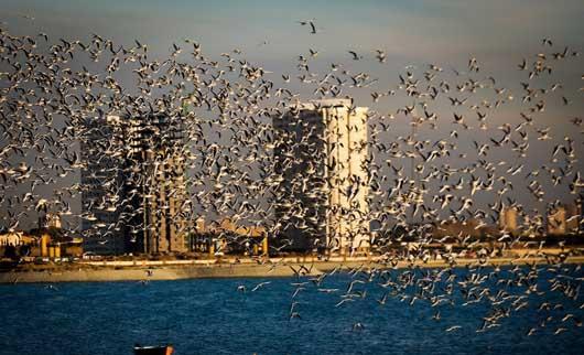 نتیجه تصویری برای دریاچه چیتگر